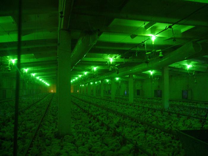 Зеленый цвет освещения