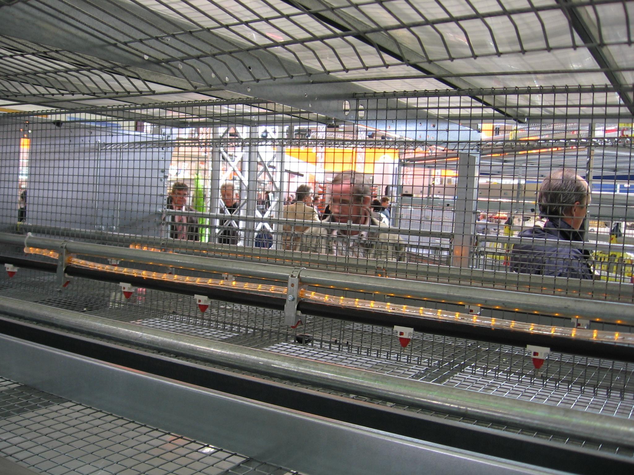 Светодиодное освещение в клетке компании Farmer Automatic