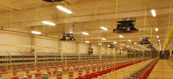 Энергосберегающее освещение для птичников