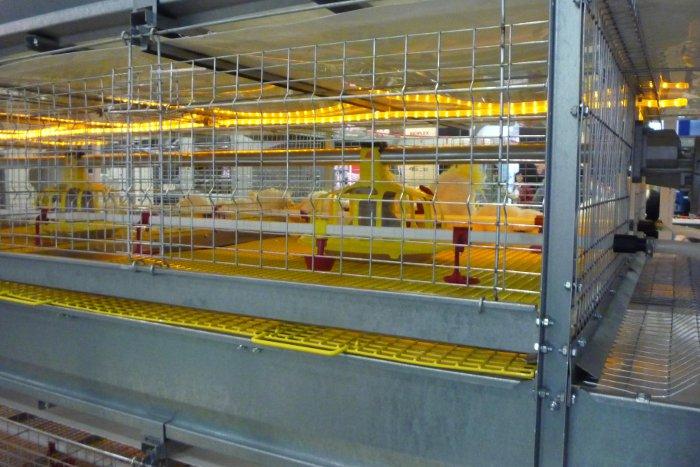 Желтый светодиодный шнур в бройлерной клетке украинской фирмы ТЕХНА скорее элемент художественного оформления, чем реальное освещение. Во-всяком случае, подобная голландская система не получила сколь-нибудь значимого распространения на птицефабриках.
