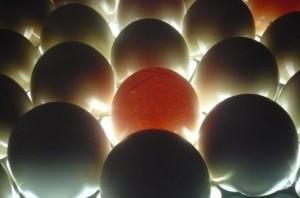 Просвечивание  яиц с помощью мощных светодиодов.