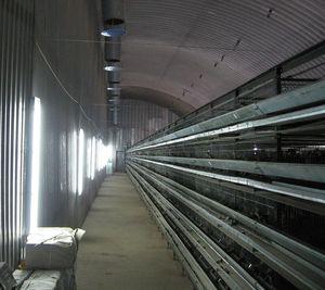 Вертикальные светильники в перепелином птичнике.